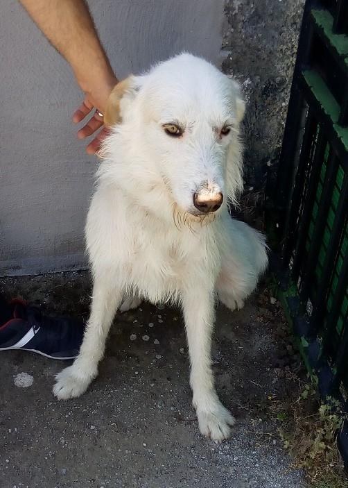 Loki perro adopcion porpatas granada (3)