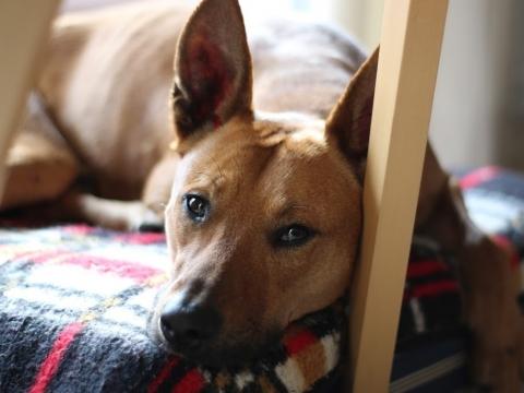 Lope perro adopcion porpatas granada (2)