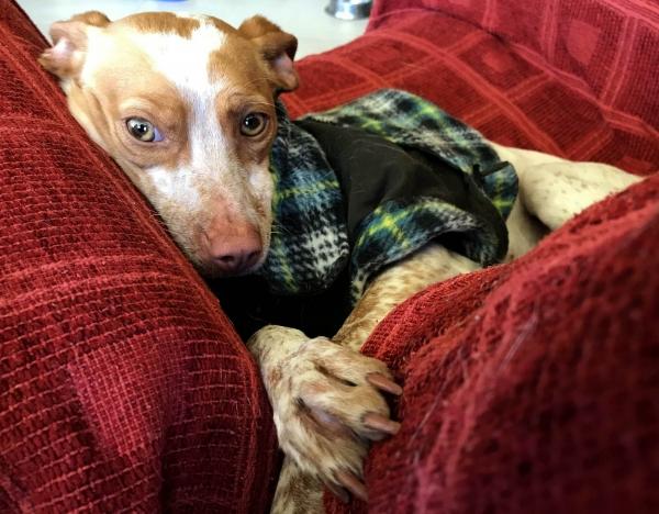 03-11-2018 manuela perra adopción granada porpatas (1)