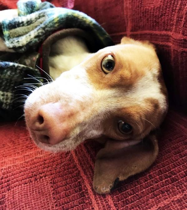 03-11-2018 manuela perra adopción granada porpatas (3)