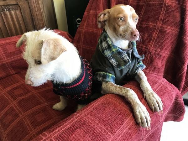 03-11-2018 manuela perra adopción granada porpatas (5)