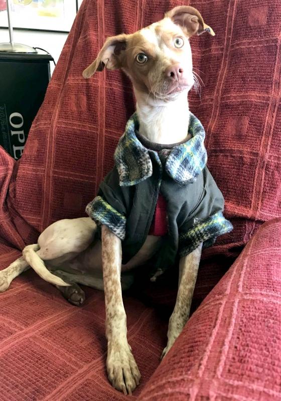 03-11-2018 manuela perra adopción granada porpatas (8)