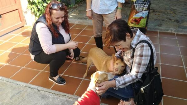 Manuela perra adopcion porpatas cruce 24-10-2018 (2)