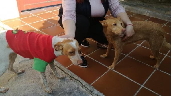 Manuela perra adopcion porpatas cruce 24-10-2018 (3)