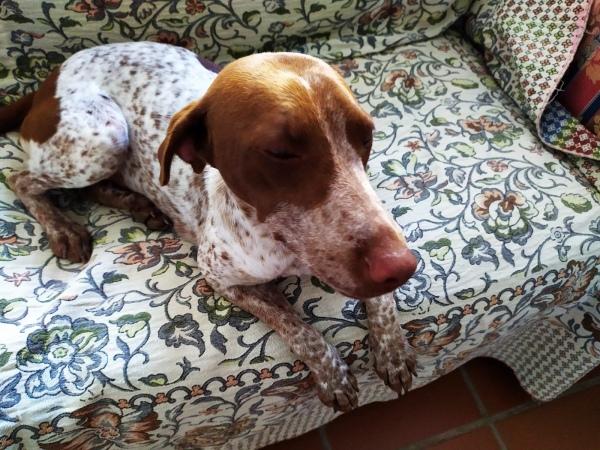 22-07-2019-Mara-perra-adopcion-porpatas-granada-4