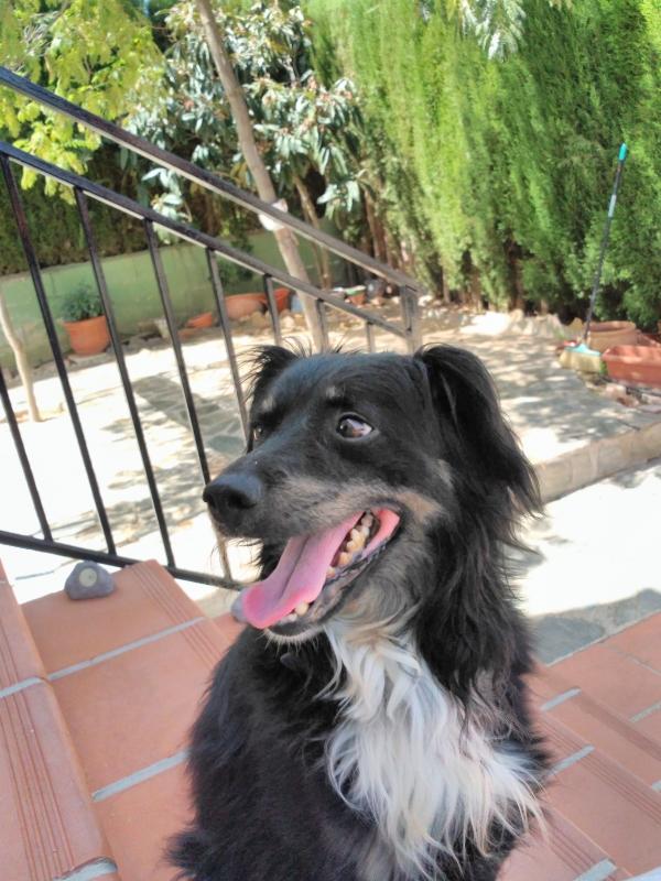 Marley-agosto-2019-perro-adopcion-porpatas-1