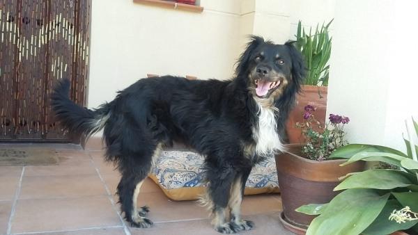 Marley-agosto-2019-perro-adopcion-porpatas-2