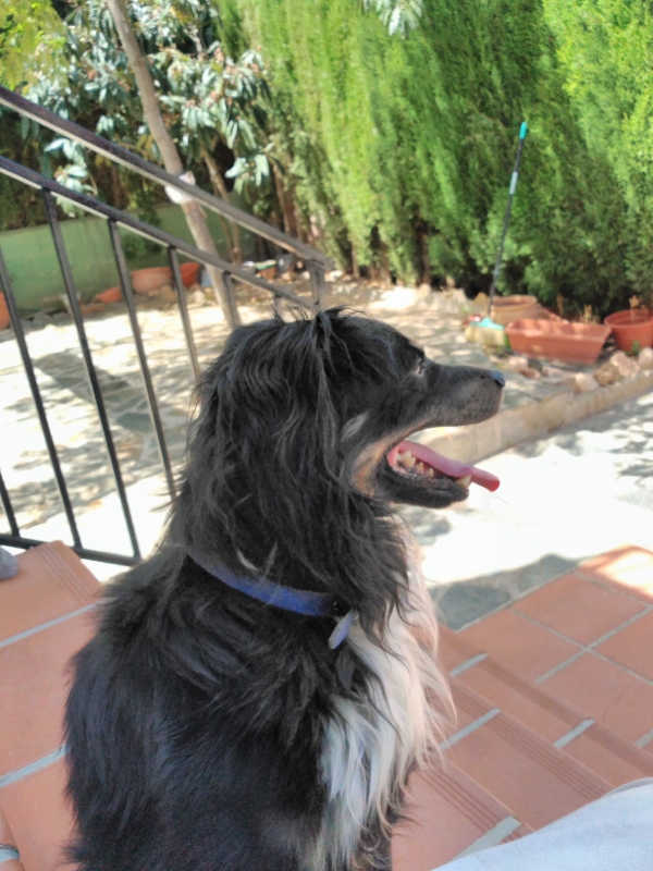 Marley-agosto-2019-perro-adopcion-porpatas-3