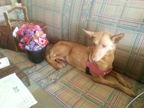 Megan perra adopcion porpatas granada mayo20118 (1)