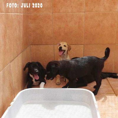 M-Hunde-Gruppenotos-Handy-29-07-20_9_b1