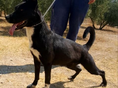 Mona perra en adopcion porpatas (6)
