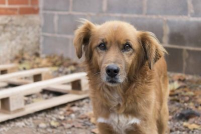 adopta-perro-monty-1024x683