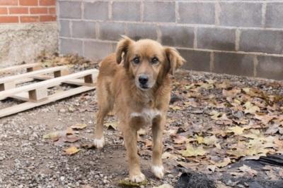 adoptar-monty-perro-1024x683