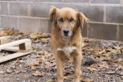 adoptar-perro-monty-1-1024x683