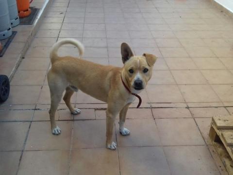 Nelson perro adopcion granada porpatas asociacion (2)