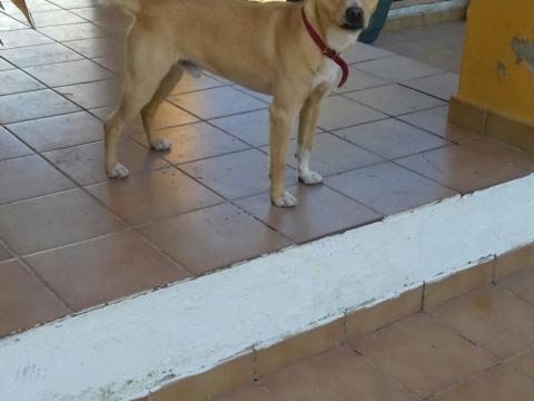 Nelson perro adopcion granada porpatas asociacion (3)