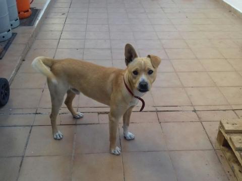 Nelson perro adopcion granada porpatas asociacion (5)