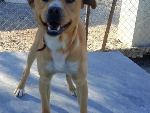 Nelson perro adopcion porpatas abril2018 (1)