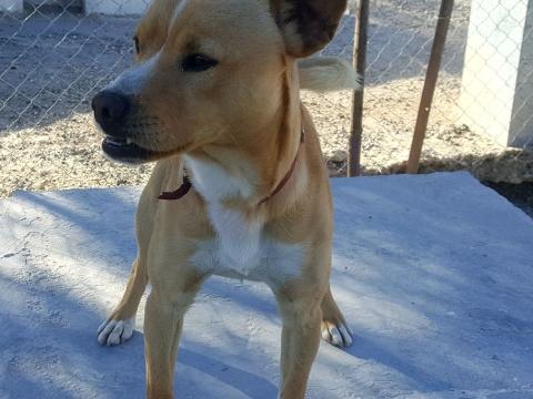 Nelson perro adopcion porpatas abril2018 (2)