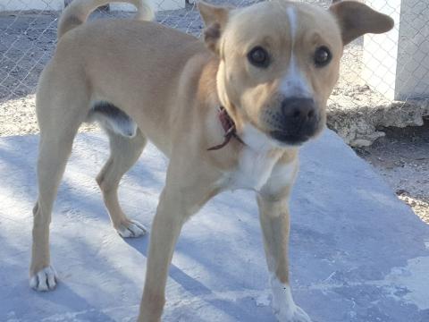 Nelson perro adopcion porpatas abril2018 (7)