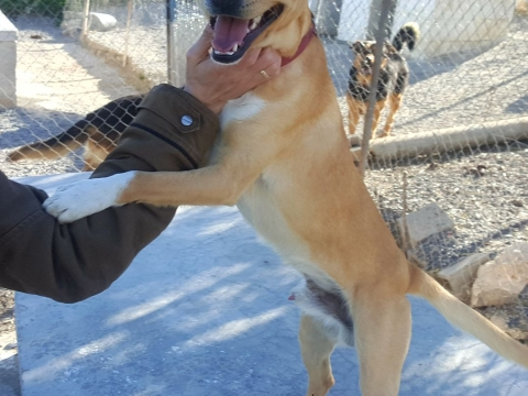 Nelson perro adopcion porpatas abril2018 (8)