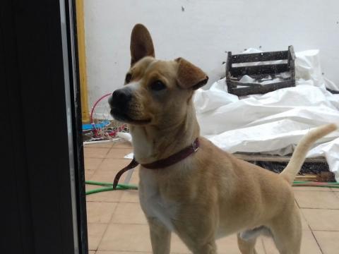 Nelson perro adopcion porpatas sevilla (2)