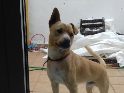 Nelson perro adopcion porpatas sevilla (5)