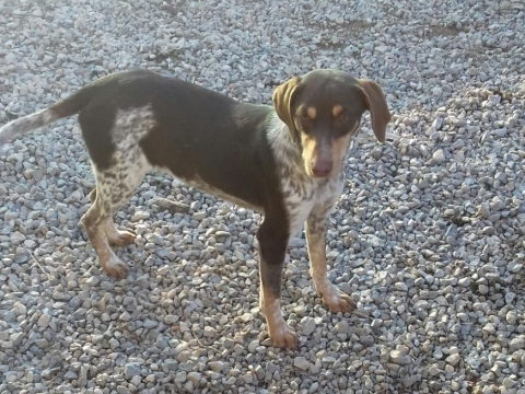 07marzo2018 Nila perra adopcion perrera (2)