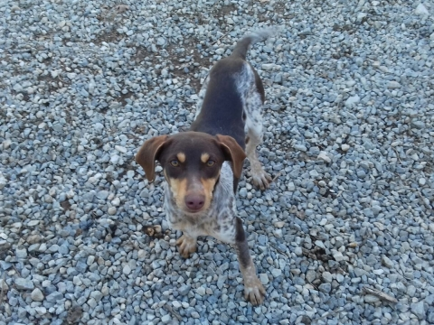 07marzo2018 Nila perra adopcion perrera (3)
