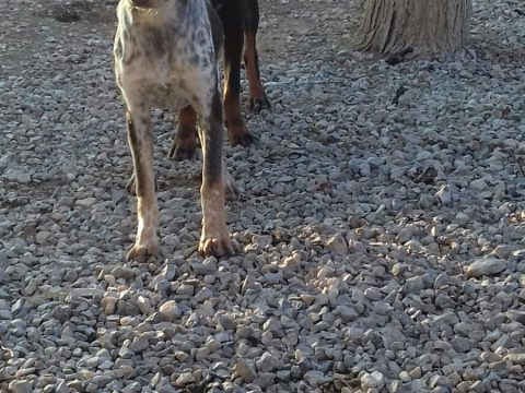 07marzo2018 Nila perra adopcion perrera (7)