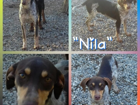 07marzo2018 Nila perra adopcion perrera (9)