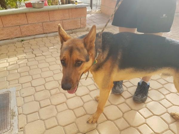 Odin perro adopcion porpatas julio2018 (4)