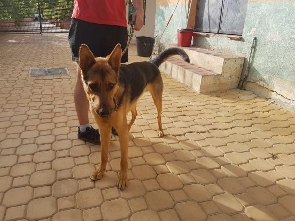 Odin perro adopcion porpatas julio2018 (5)