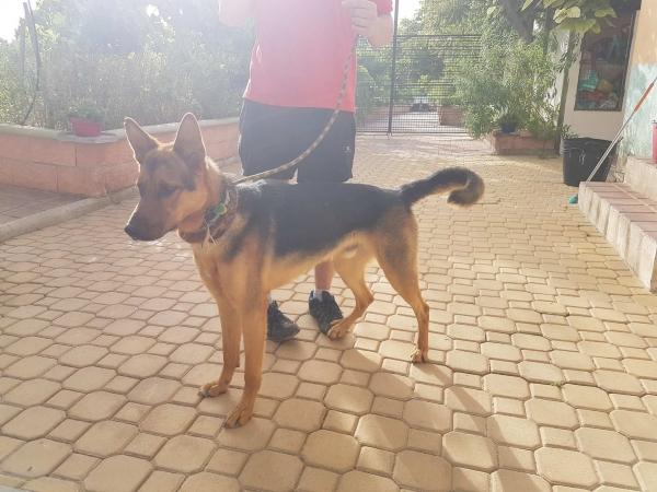 Odin perro adopcion porpatas julio2018 (7)