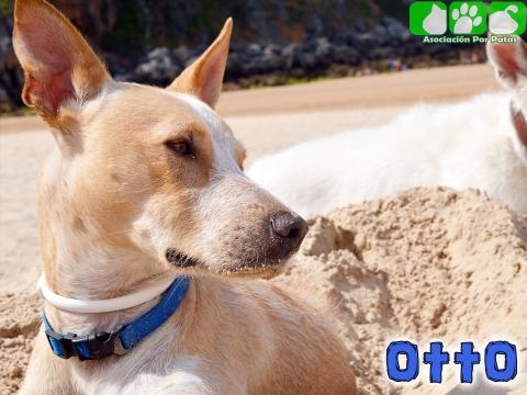 Otto 3