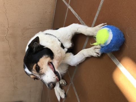 Pamela perra adopcion porpatas granada (1)
