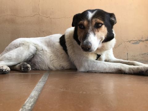 Pamela perra adopcion porpatas granada (4)