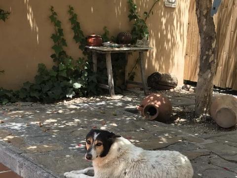 Pamela perra adopcion portas recogida 24-06-2018 (1)