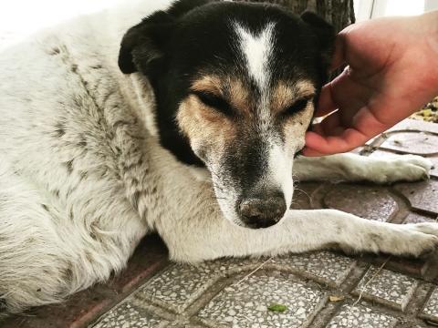 Pamela perra adopcion portas recogida 24-06-2018 (3)