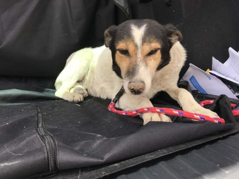 Pamela perra adopcion portas recogida 24-06-2018 (6)