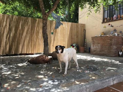 Pamela perra adopcion portas recogida 24-06-2018 (8)