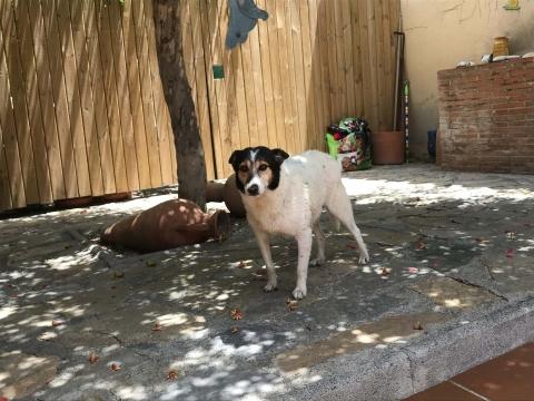 Pamela perra adopcion portas recogida 24-06-2018 (9)