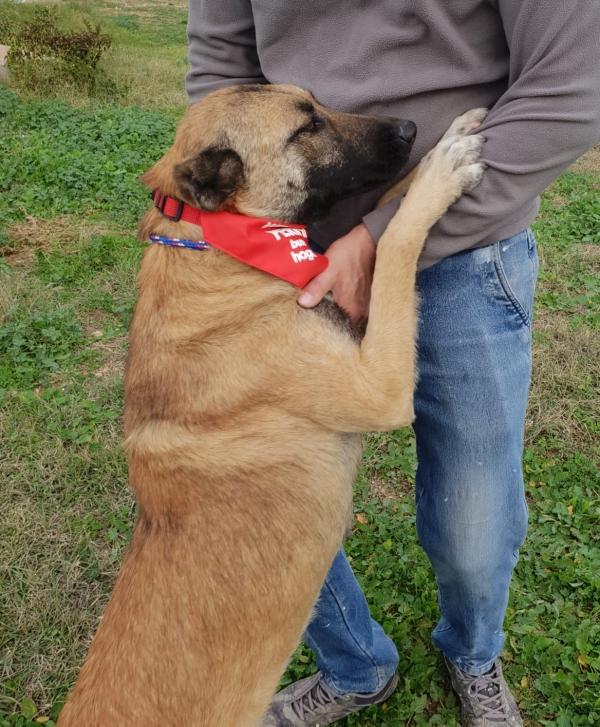 14-11-2018 princesa perra adopcion granada (12)