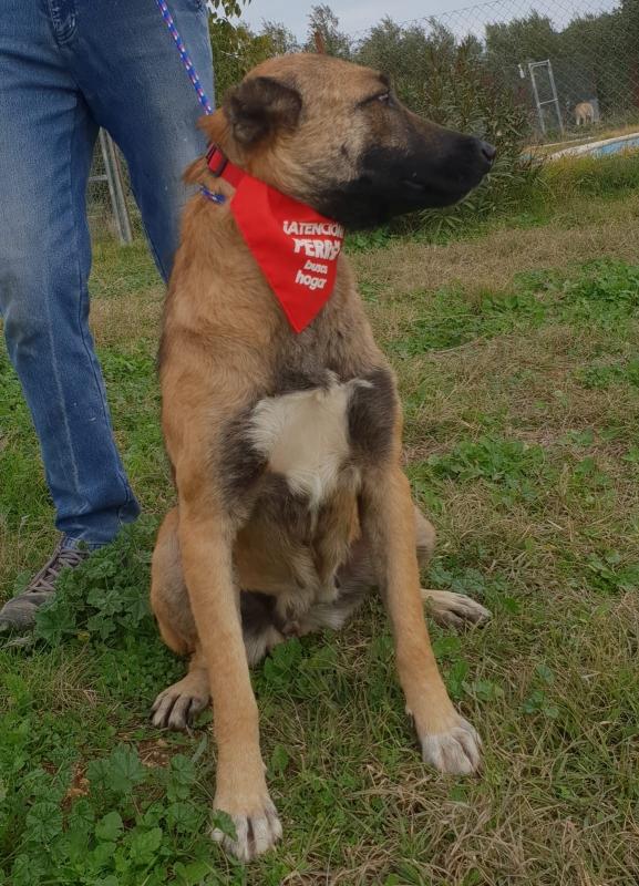 14-11-2018 princesa perra adopcion granada (4)
