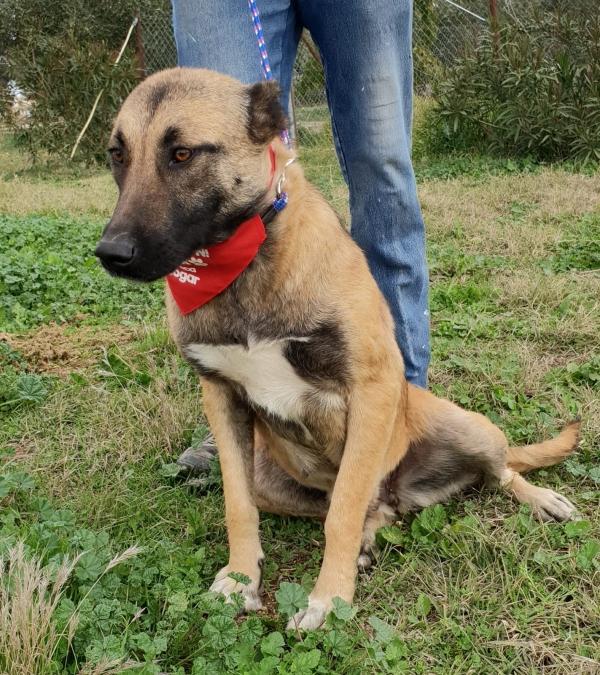 14-11-2018 princesa perra adopcion granada (8)