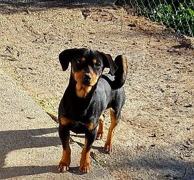 Rocco perro peque adopcion porpatas granada (2)