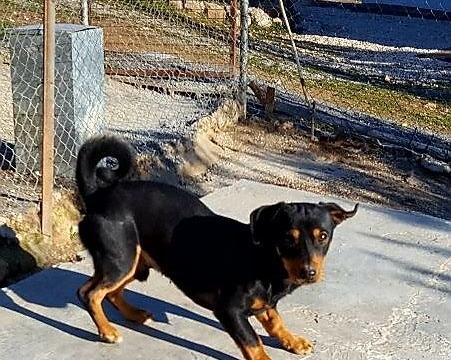 Rocco perro peque adopcion porpatas granada (3)
