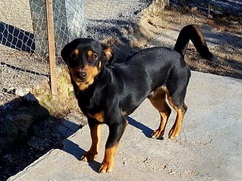 Rocco perro peque adopcion porpatas granada (4)