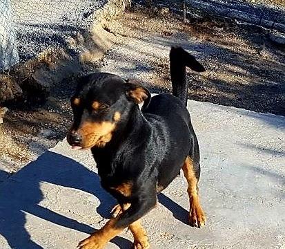 Rocco perro peque adopcion porpatas granada (5)