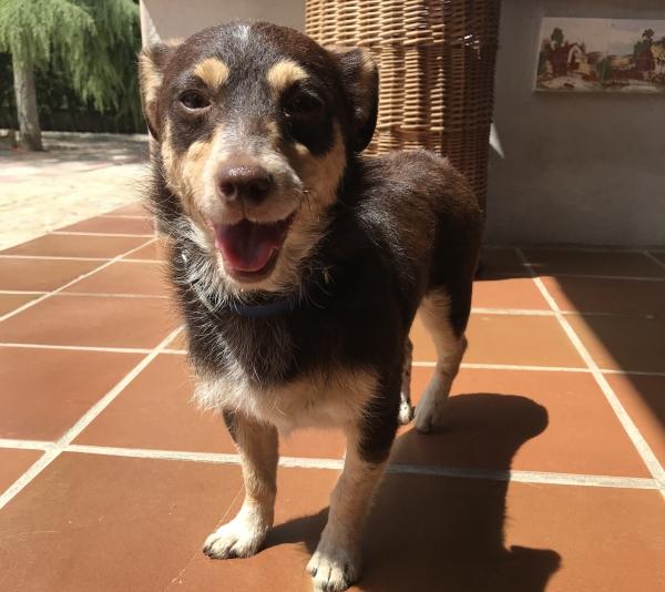 Sona perra adopcion porpatas granada recogida 22-06-2018 (1)